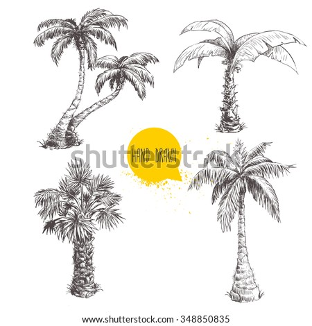 Hand drawn palm trees sketch set. Vector illustration on white background. Travel and vacation symbols. - stock vector