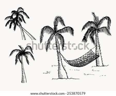 Hand drawn palm trees. Vector, editable image. Isolated objects.  - stock vector