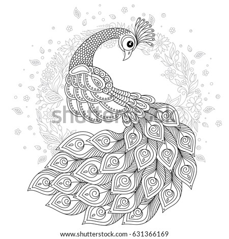 hand drawn peacock for anti stress coloring page with high details isolated on white background