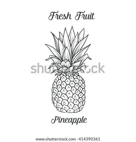 Hand drawn pineapple icon. Vector illustration  pineapple in old ink style. For brochures, banner, restaurant menu and market