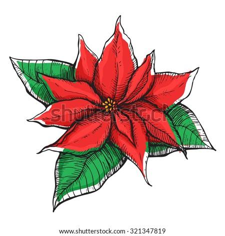Hand drawn Poinsettia (Christmas Star). Christmas and holiday decor. - stock vector