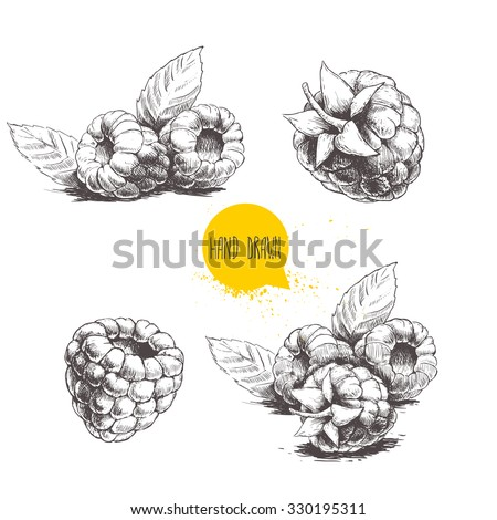 Hand drawn raspberry set isolated on white background. Retro sketch style vector eco food illustration - stock vector