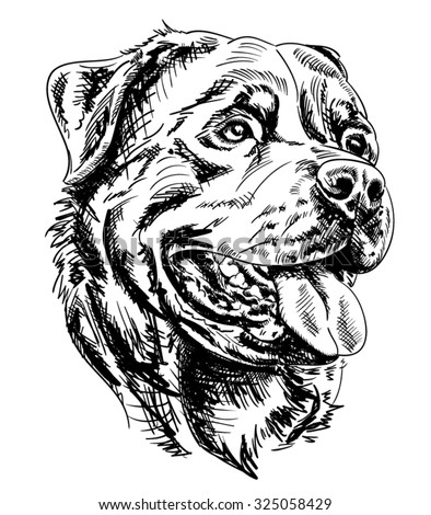 Rottweiler Stock Images, Royalty-Free Images & Vectors ...