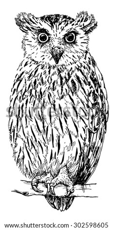 Hand drawn realistic sketch of a fish owl