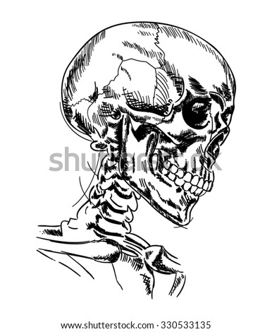 Hand drawn realistic vector medical illustration of a skeleton - Human skull and neck isolated - stock vector