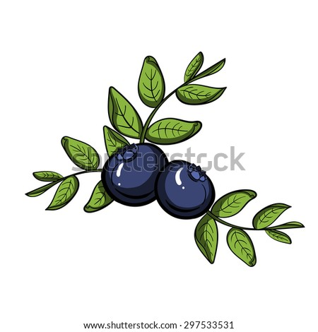 Hand drawn ripe blueberry on the white background. Vector illustration