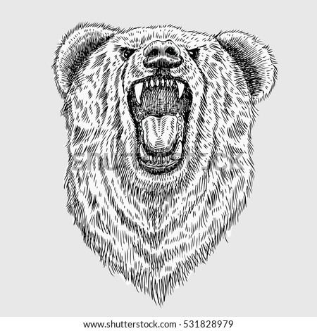 Lion Sketch Images Stock Photos amp Vectors  Shutterstock