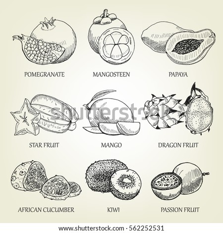 Hand drawn set of different tropical fruits. Outline realistic icons of healthy food. Vector sketch of exotic plants good for logo design, poster, banner creation, recipe book or restaurant menu