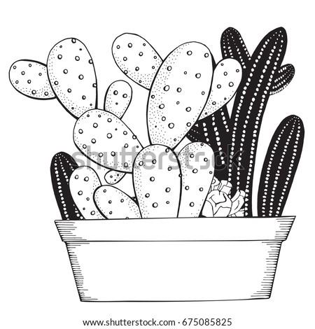 cacti colorful pots banco de imagens, imagens e vetores livres de ... - Prickly Pear Cactus Coloring Page