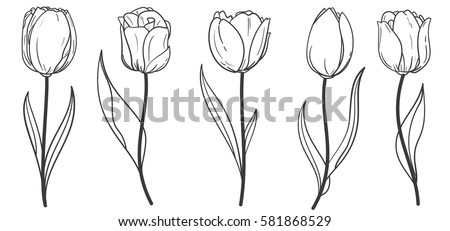 hand drawn set of tulips branches flower isolated on white background vintage vector illustration