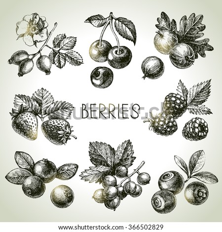 Hand drawn sketch berries set. Vector illustration of eco food - stock vector
