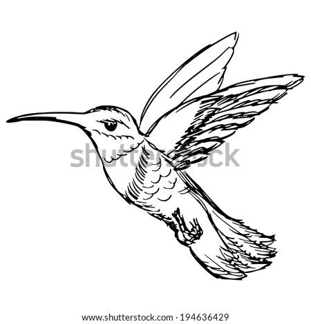 Colibri Contoure