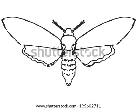 hand drawn, sketch, cartoon illustration of moth - stock vector
