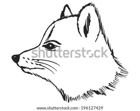 hand drawn, sketch illustration of polar fox
