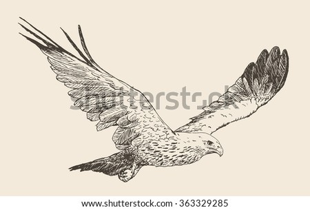 Hand drawn sketch of a eagle in flight - stock vector