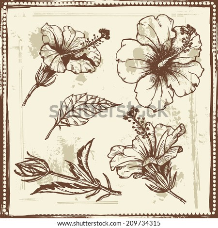 Hand drawn sketch of  hibiscus flowers.  All objects are conveniently grouped and are easily editable. - stock vector