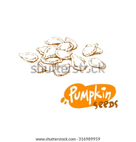 Pumpkin Seed Drawing Hand Drawn Sketch of Pumpkin
