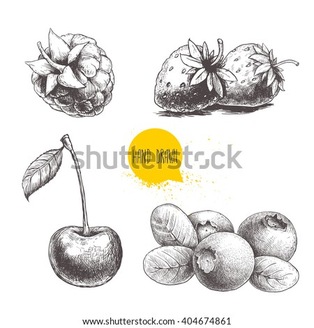 Hand Drawn Sketch Style Berries Set Stock Vector 404674867 ...