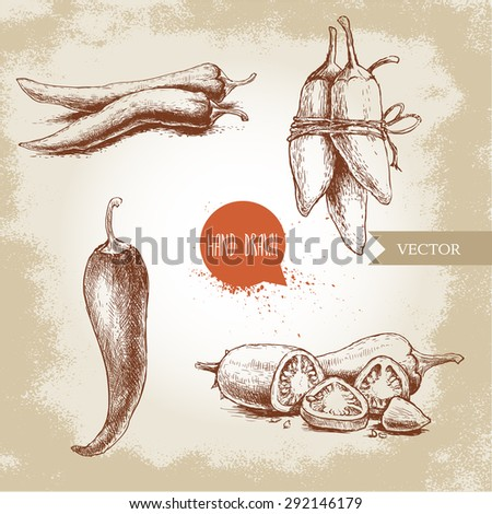 Hand drawn sketch style chili peppers set. Vintage eco food vector illustration. Ripe and sliced peppers. Grunge background. - stock vector