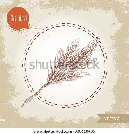Hand drawn sketch style illustration of wheat sheaf. Bakery and fertility symbol. - stock vector