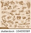 Hand drawn spices and herbs collection. Vector design elements. - stock photo