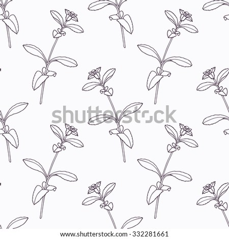 Hand drawn stevia branch outline seamless pattern. Doodle drawing spicy herbs. Kitchen background. Hand drawn seasoning. Vector illustration - stock vector