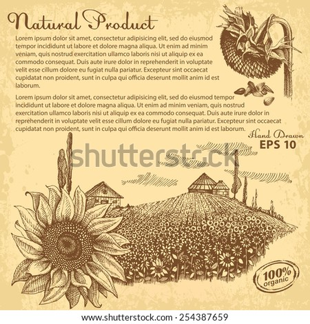 Hand drawn sunflowers. Vector design with space for your text