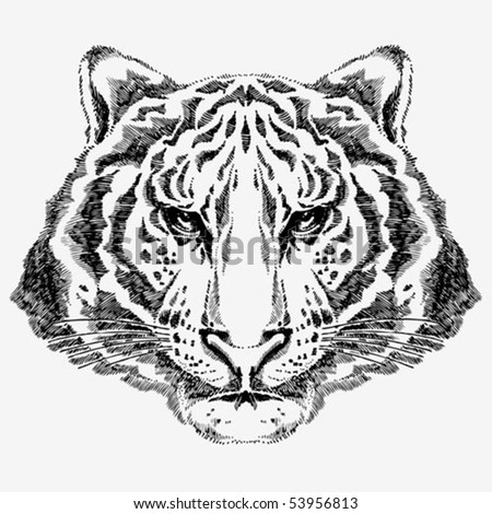 Hand drawn tiger portrait created with black ballpoint pen - stock vector