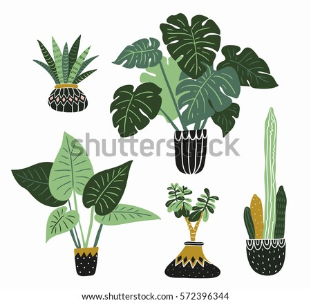 hand drawn tropical house plants style modern and elegant home decor