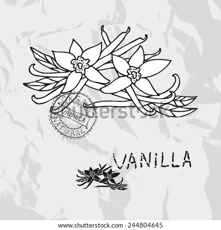 Hand drawn vanilla with flowers, design elements. Culinary spices. Can be used for cards, invitations, gift wrap, print, scrapbooking. Kitchen theme - stock vector