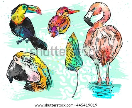 Hand drawn vector graphic color abstract illustration set of tropical birds toucan,parrot macaw,flamingo and kingfisher. - stock vector
