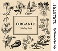 Hand drawn vector herbs. Organic healing plants background. Officinale, medicinal, cosmetic leaves, seeds, flowers hand  sketched illustration. Vintage floral card or poster. - stock vector