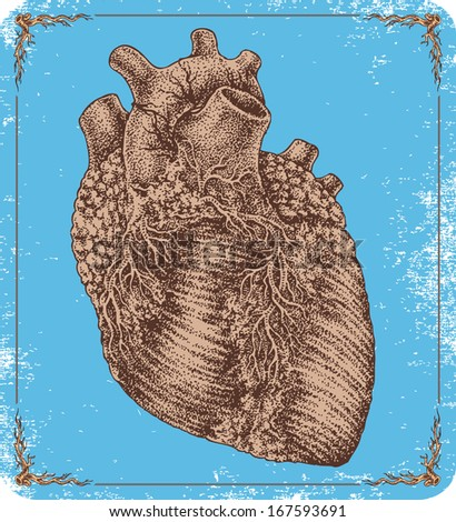 Hand-drawn vector human heart. - stock vector