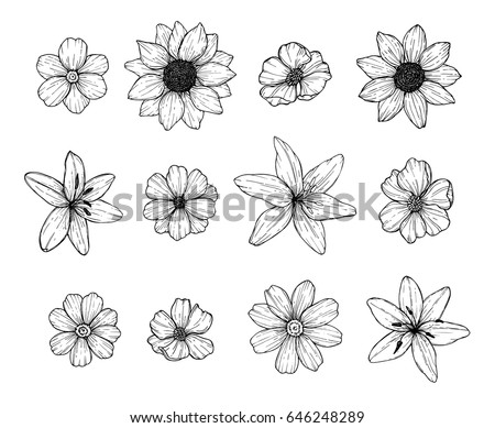 Linework Stock Images Royalty Free Images Amp Vectors