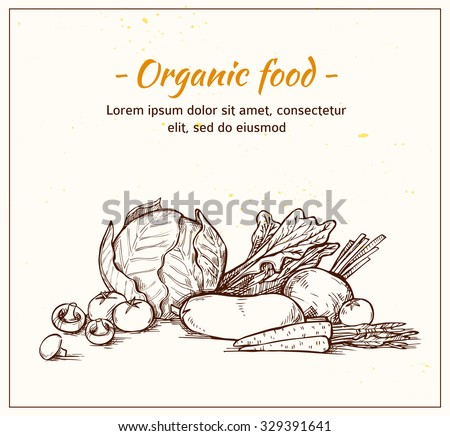 Hand drawn vector illustration -Fresh vegetables. Supermarket. Grocery store. Organic and vegan food. - stock vector