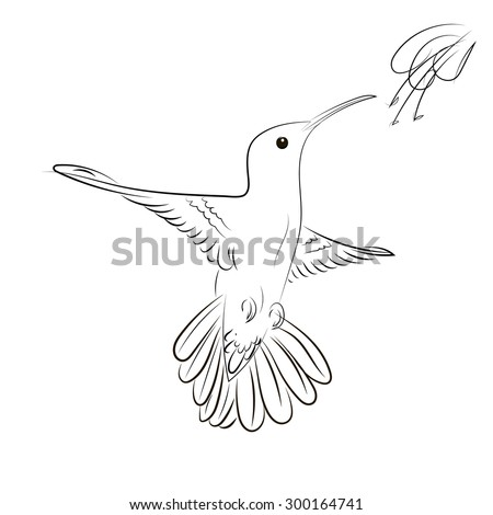 Hand Drawn vector illustration isolated on white background. Sketch for tattoo. Colibri drawing.  - stock vector