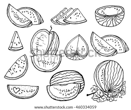 Hand drawn vector illustration - watermelon and slices of watermelon