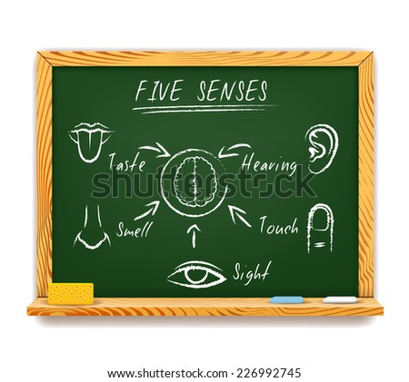 Hand-drawn vector infographic on a wood framed chalkboard of The Five Senses depicting  sight  touch  smell  taste and hearing with arrows pointing to a human brain - stock vector