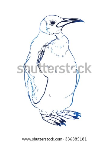 Hand drawn vector penguin - stock vector