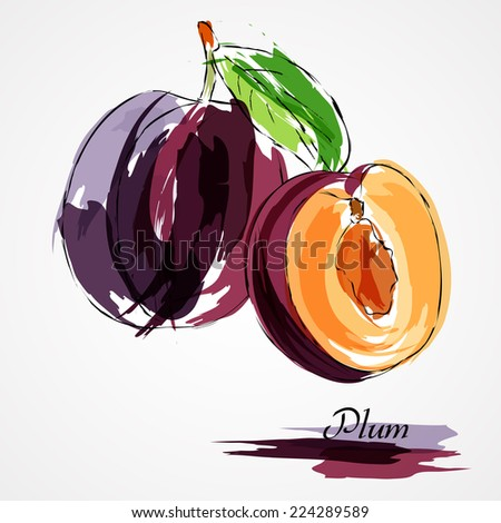 Hand drawn vector purple plum ripe fruits whole and piece on light background - stock vector