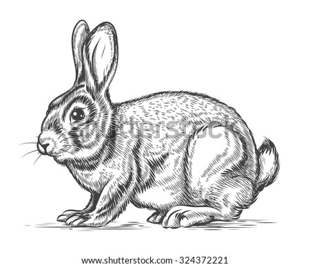 Hand drawn vector rabbit in engraving style. Bunny and hare, vintage design sketch illustration - stock vector