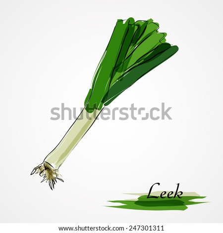 Hand drawn vector ripe leek on the light background