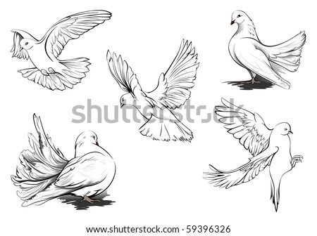 Hand drawn vector sketches of beautiful White doves in different positions. All doves are in separate layers. Two doves are more detailed. - stock vector