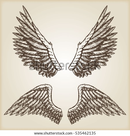 Hand drawn vector vintage illustration - naturalistic spread wings sketch.