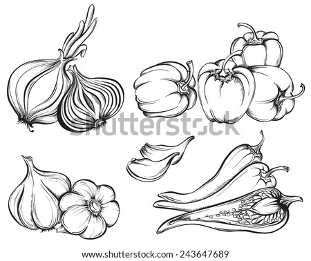 Hand Drawn Vegetables Set. Collection of spices: paprika, chili pepper, garlic, onion isolated on white background. Vector illustration - stock vector