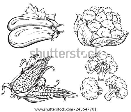 Hand Drawn Vegetables Set. Corn, cauliflower, broccoli, eggplant isolated on white background. Vector illustration - stock vector