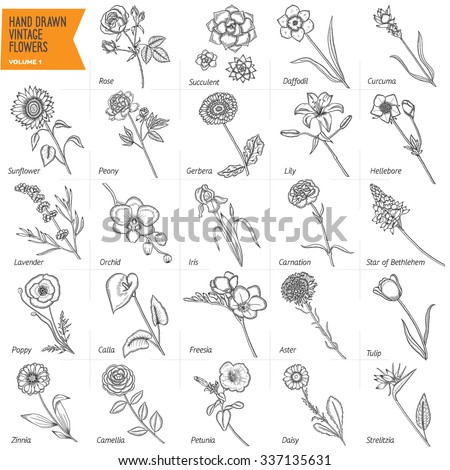 Hand drawn vintage flowers vector set. Volume 1. Pen graphic floral collection. Rose, gerbera, peony, lily. Trendy design elements. All buds and most of leafs are separate from stalks. - stock vector