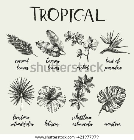 Hand drawn vintage retro sketch tropical plants set. Vector illustrations - stock vector