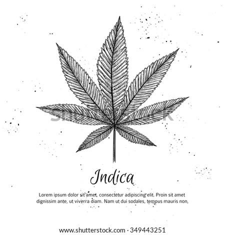 Hand drawn vintage vector illustration - Medical cannabis. Sketch - stock vector