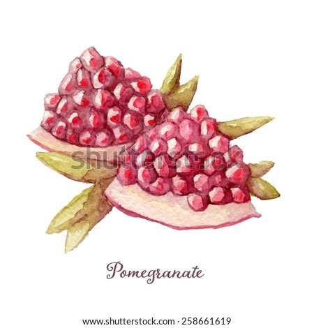 Hand drawn watercolor painting of pomegranate. Vector illustration on white background, eps10 - stock vector